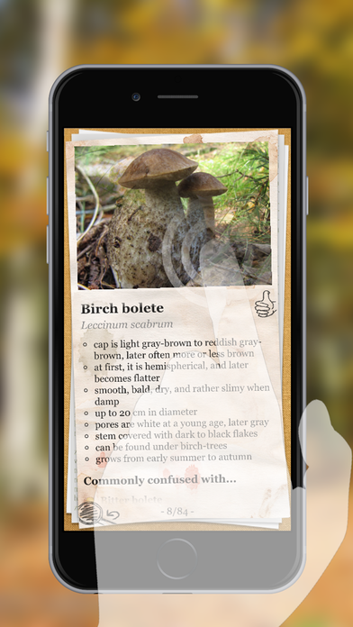 Application champignons iphone