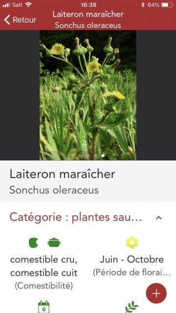 Application iphone plantes médicinales